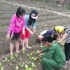 """Chương trình """"Em tập làm vườn"""""""